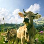 Agricultura e animais na Islândia