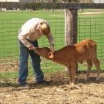 estagio remunerado em agricultura e animais na Austrália