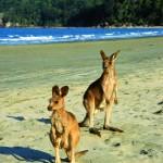 Praia de Cape Hillsborough na Austrália