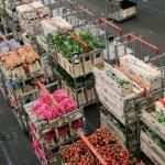 VidaEdu estagios profissionais em estufas de flores na holanda
