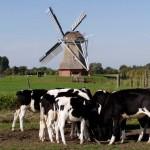 VidaEdu Farm Saty na holanda
