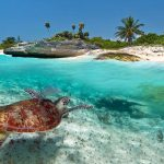VidaEdu Voluntariado no Sri Lanka com tartarugas
