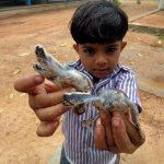 VidaEdu ajuda as tartarugas no Sri Lanka, Ásia
