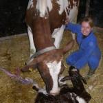experiencia profissional com animais na holanda