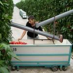 estágio em agricultura na holanda