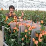 Holanda um país com flores lindas