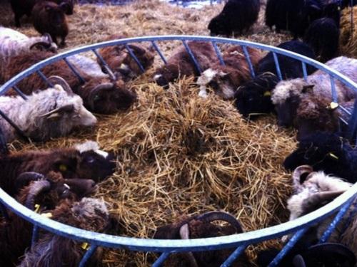 VidaEdu estágios em agricultura numa farm Norway