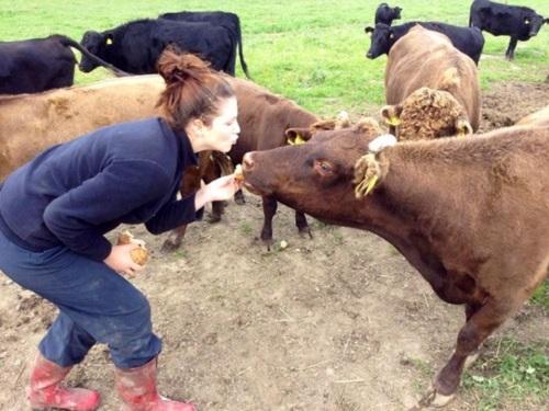 VidaEdu estágios em agricultura e animais na noruega