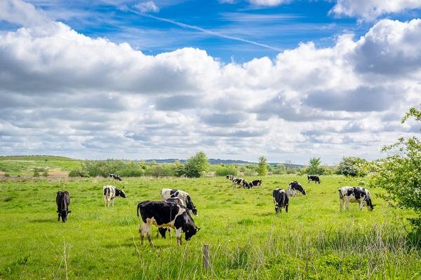 vidaedu agricultura e animais em quintas na dinamarca