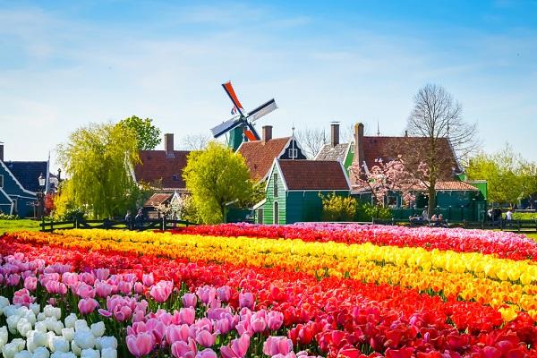 vidaedu emprego estudantes trabalho quintas flores holanda