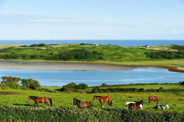 vidaedu estagiar em quintas com cavalos na irlanda