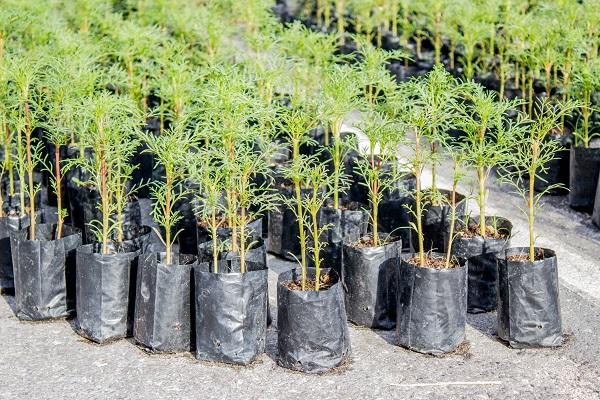 vidaedu estagios remunedados em viveiros de plantas holanda