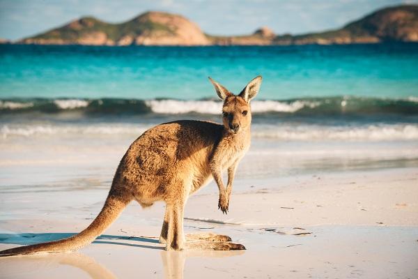 vidaedu estagios todas areas pofissionais australia