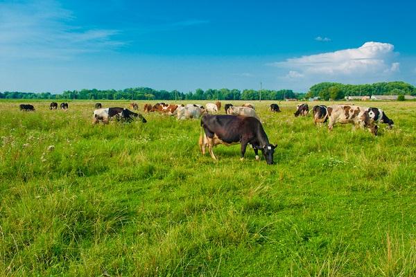 vidaedu estagios trabalho remunerado agricultura e animais na holanda
