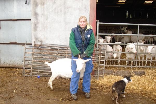 vidaedu estudante a estagiar numa quinta com animais na irlanda
