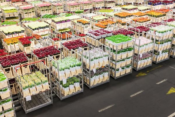 vidaedu mercado flores na holanda