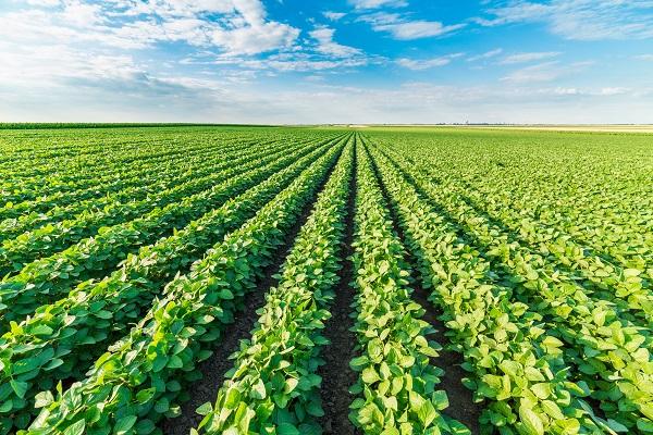 vidaedu quintas campo cultivo trabalho remuenrado estagios estudantes dinamarca