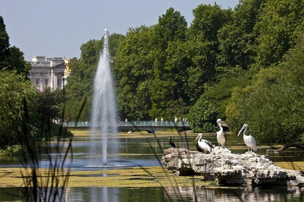 vidaedu-au-pair-viajar-londres-pelicans-in-st-james-park