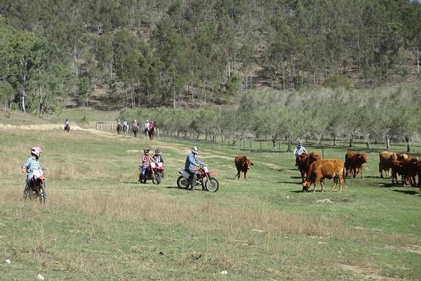 vidaedu curso introdutorio na quinta para agricultura australia