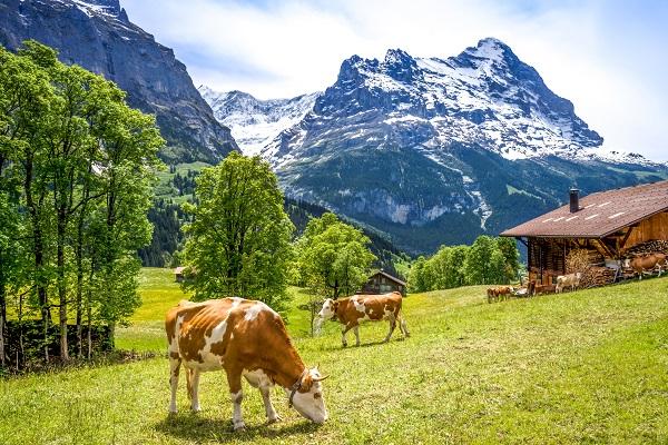 vidaedu empregos remunerados suica alpes suicos trabalho quintas
