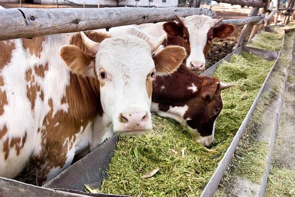 vidaedu estagios em quintas na suica