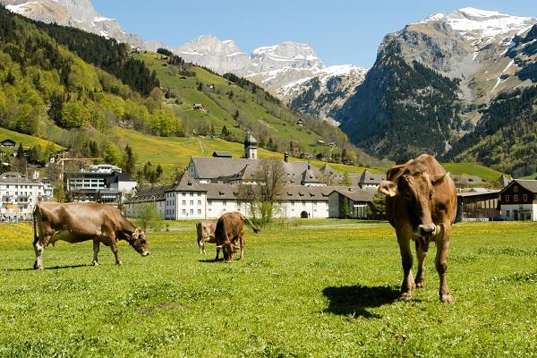 vidaedu experiencia profissional em quintas na suica alema