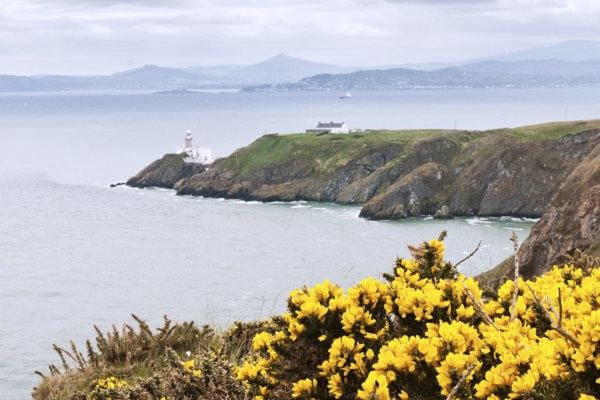 Yellow flowers and the lighthouse, Howth, Ireland