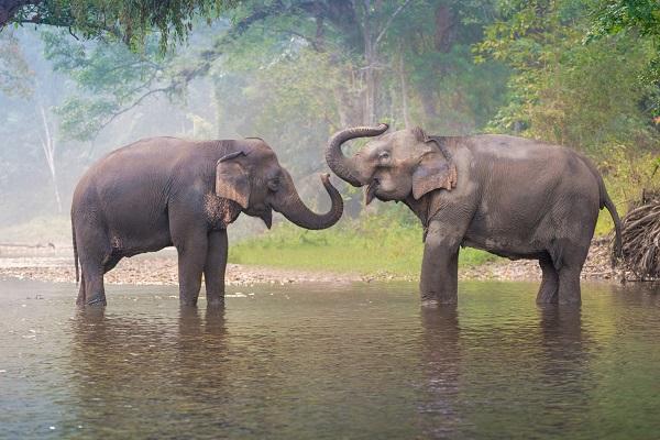 vidaedu projeto elefentes voluntariado tailandia