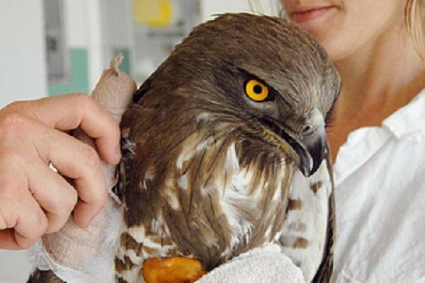 vidaedu voluntariado aves selvagens franca
