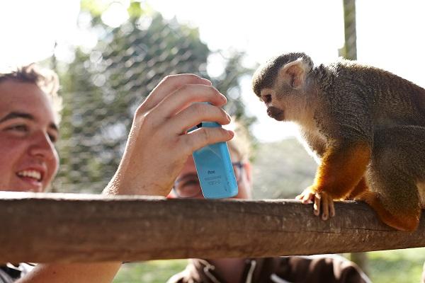 vidaedu voluntariado internacional cuidar animais africa do sul