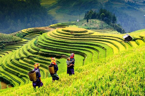 vidaedu voluntariado internacional viajar Rice fields vietname