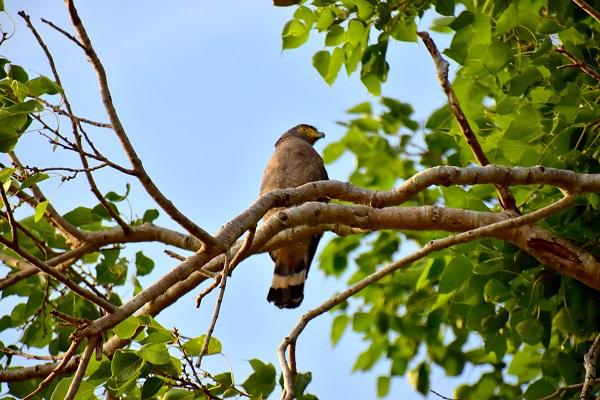vidaedu voluntariado protecao aves selvagens franca