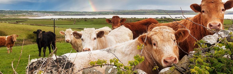 Pré-Inscrição – Estágios de Verão – Farm Stay na Holanda