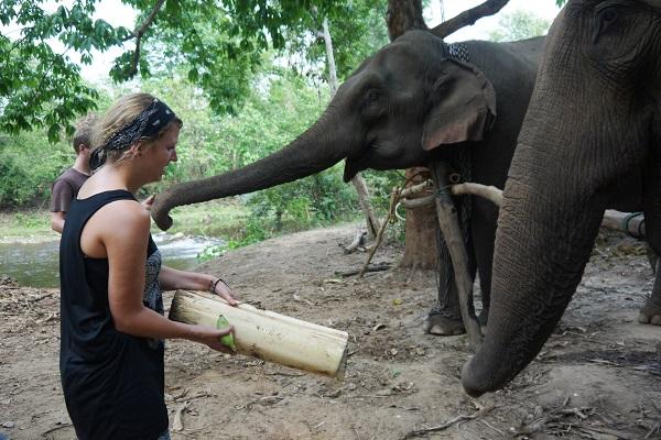 vidaedu voluntariado internacional elephants tailandia