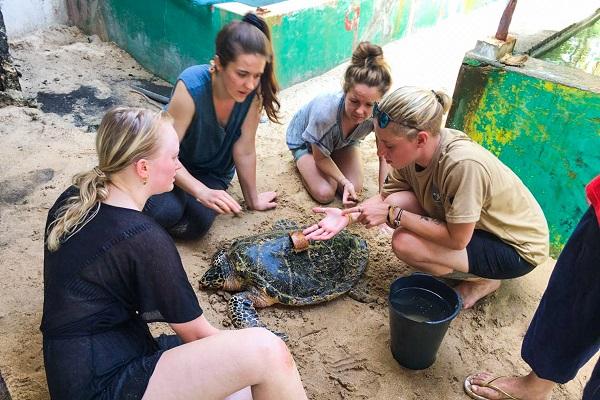 vidaedu voluntariado internacional turtle sri lanka