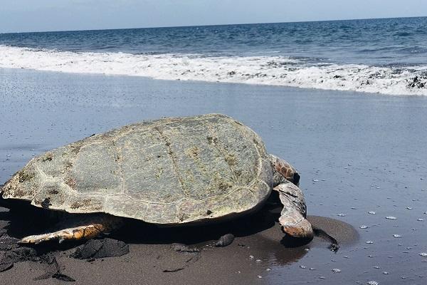 vidaedu voluntariado internacional tartarugas viajar cabo verde