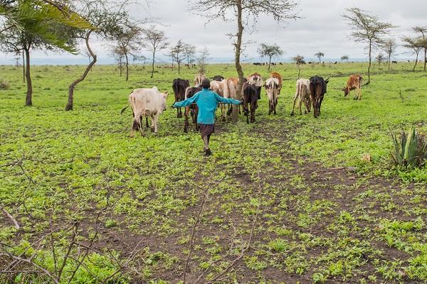 vidaedu voluntariado internacional maasai tanzania africa