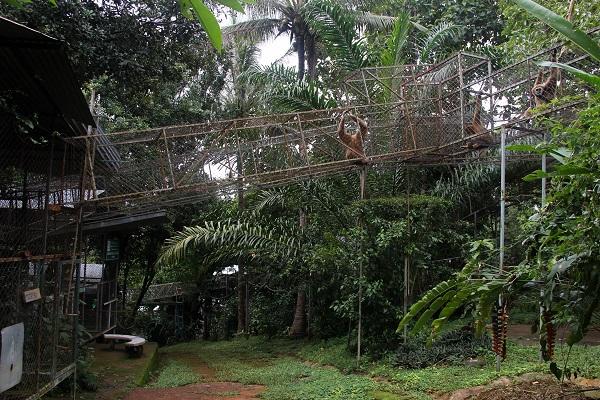 vidaedu gibbons voluntariado internacional tailandia