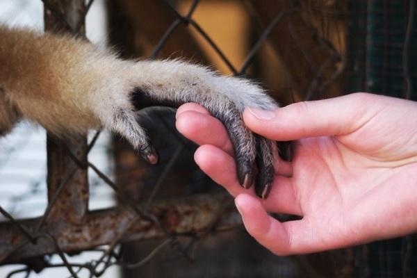 vidaedu voluntariado internacional macacos tailandia asia