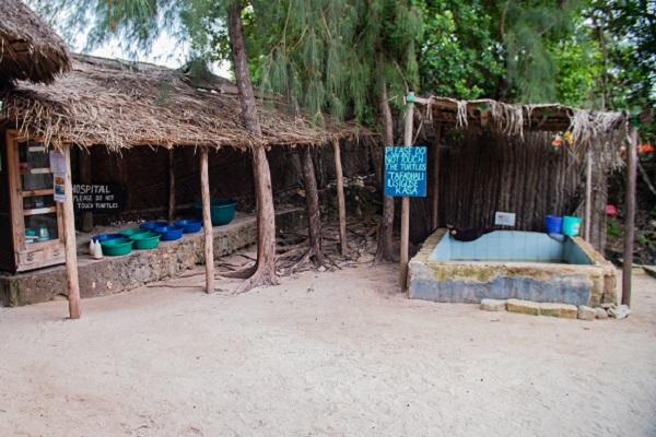 vidaedu voluntariado internacional turtles zanzibar africa
