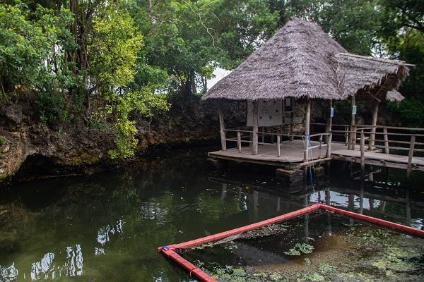 vidaedu voluntariado turtles lagoon zanzibar africa