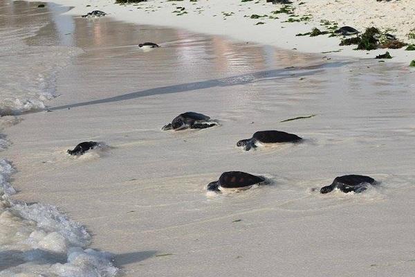 vidaedu volunteer zanzibar turtle tanzania