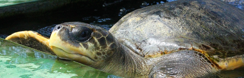 Projeto Tartarugas no Sri Lanka