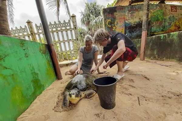 vidaedu voluntariado internacional sri lanka turtle