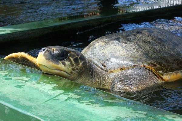 vidaedu voluntariado internacional tartarugas viajar sri lanka