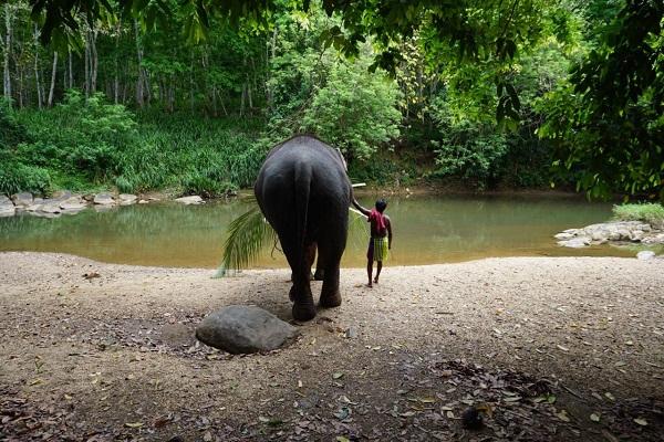 vidaedu elefantes mawanella sri lanka voluntariado internacional