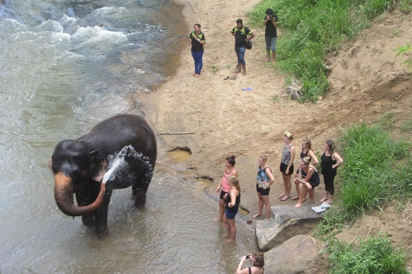 vidaedu elefantes voluntariado internacional sri lanka