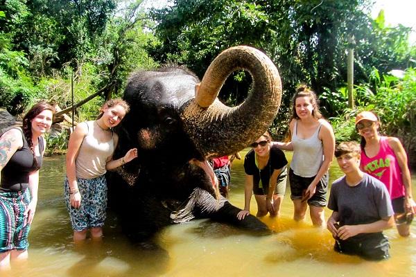 vidaedu volunteer international elefantes sri lanka