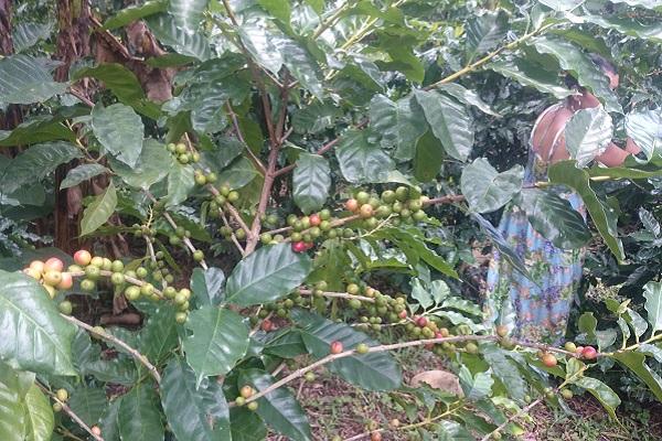 vidaedu costa rica voluntariado internacional agricultura esparza
