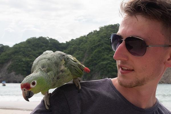 vidaedu ilha tortuga voluntariado internacional costa rica